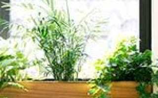 Комнатные растения для южного окна