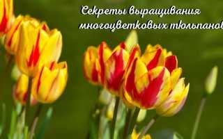 Тюльпаны универсальные цветы для любого адресата