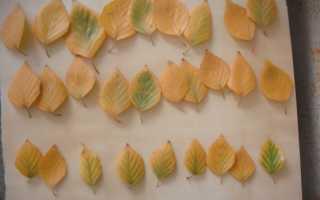 Как сделать розы из листьев деревьев