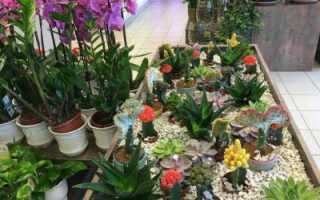Как удалить мошек из комнатных растений