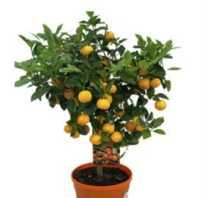 Комнатные растения декоративные лиственные