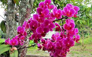 Когда требуется пересадка орхидеи в домашних условиях