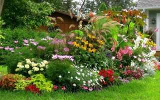 Как выбирать многолетние цветы