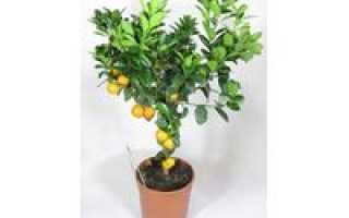 Комнатных растений цветущих каталог