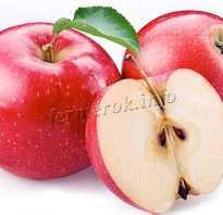 Белый сорт ранних яблок