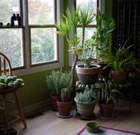 Комнатные растения которым не нужен солнечный свет
