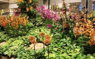 Орхидея в домашних условиях и в саду