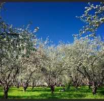 Вредители плодов яблони