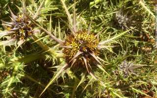 Комнатные растения с колючками
