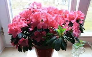 Какие комнатные цветы цветут круглый год