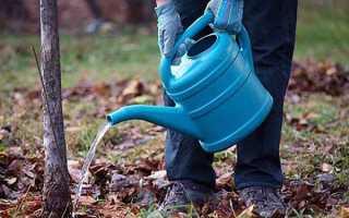 Внесение удобрений осенью под грушу