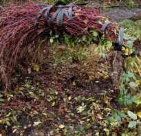 Как укрыть плетущиеся розы на зиму
