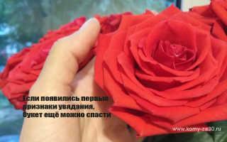 Как оживить срезанные розы