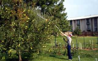 Чем обрабатывать яблони весной
