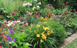 Ароматные цветы в саду