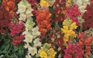 Цветы однолетки для дачи фото и названия