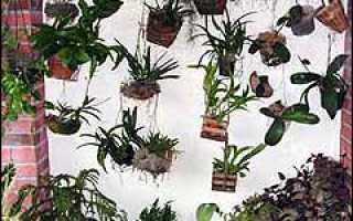 Орхидеи советы начинающим орхидееводам