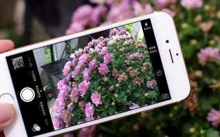 Как использовать цветы в фотосессиях