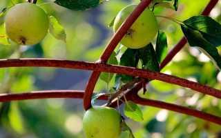 Как правильно посадить семена от яблони