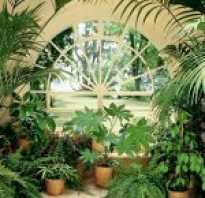 Комнатные растения на ярмарке в йёнчёпинге
