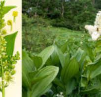 Какие есть ядовитые цветы и можно ли их выращивать