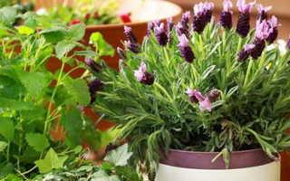 Как удобрять комнатные цветы в домашних условиях правильная дозировка