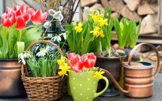Комнатные цветы каталог луковичные