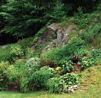 Выбор травянистых многолетников для сада на склоне
