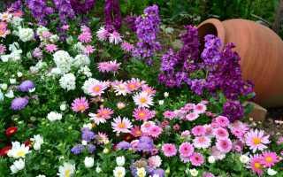 Бордюрные многолетники виды низкорослых цветов правила ухода жми