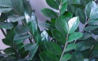 Комнатные растения для сухих помещений