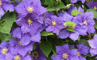 Какие цветы сажать осенью Посадка многолетних цветов осенью