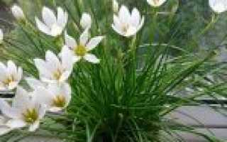 Как ухаживать за цветком выскочка