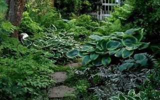 Какие есть тенелюбивые садовые цветы с фото
