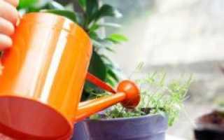 Как правильно нужно поливать цветы