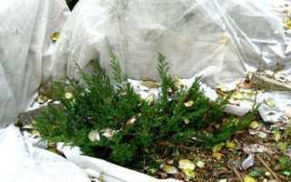 Как укрыть цветы на зиму