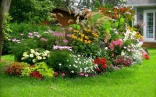 Какие многолетние цветы можно выбрать для дачного участка