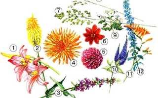 Цветник с любимыми георгинами