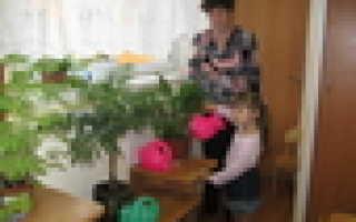 Комнатные растения в детском саду по возрастам