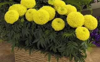 Как вырастить цветы на солнечном балконе