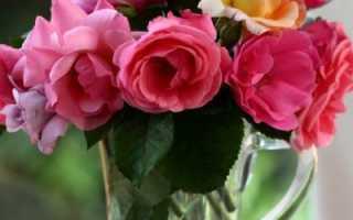 Как сохранить розы дольше свежими