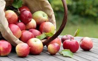 Яблони для сибири сорта фото и описание
