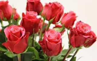 Как выбирать розы в магазине