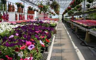 Как вырастить цветы в теплице домашняя оранжерея