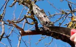 Обрезка яблонь осенью в подмосковье видео