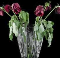 Как выбрать розы из букета для укоренения