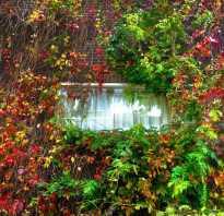 Фото и названия декоративных и цветущих лиан для сада