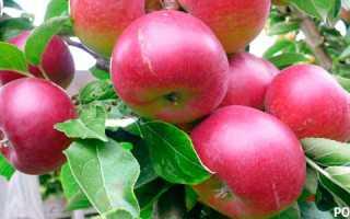 Как приготовить яму для посадки яблони весной