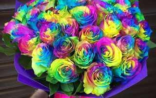 Как вырастить радужную розу самостоятельно