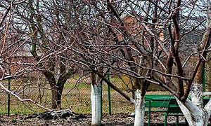 Подкормка колоновидных яблонь осенью удобрениями