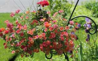 Преимущества весящих садовиз однолетних цветов
